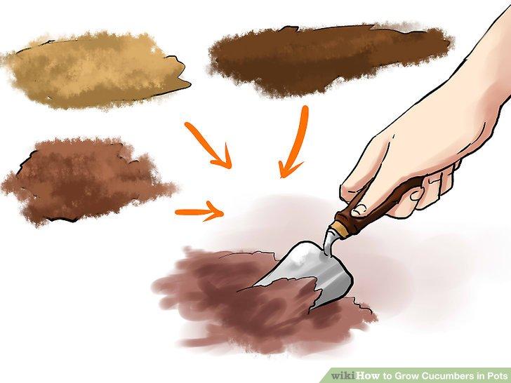 آموزش کاشت خیار در گلدان مرحله 5