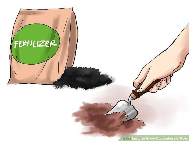 آموزش کاشت خیار در گلدان مرحله 6