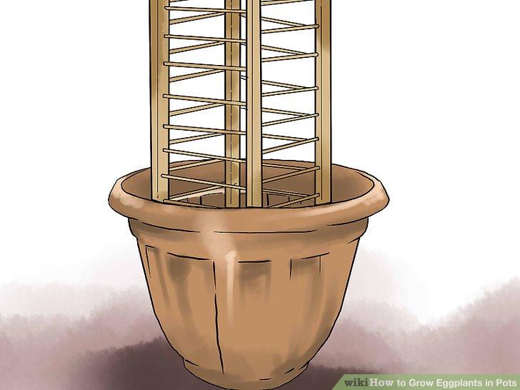 آموزش کاشت بادمجان در گلدان مرحله 16