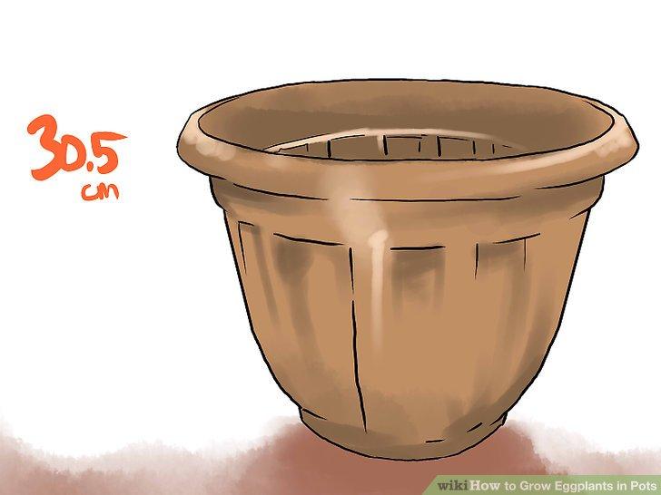 آموزش کاشت بادمجان در گلدان مرحله 2