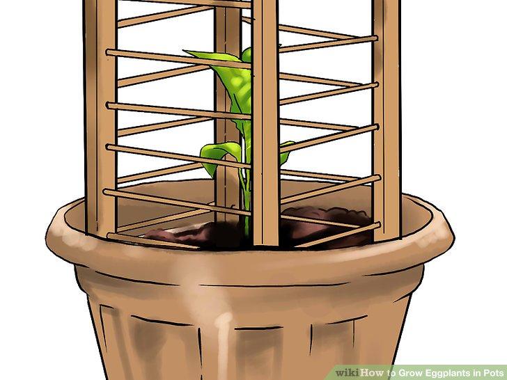 آموزش کاشت بادمجان در گلدان مرحله 20