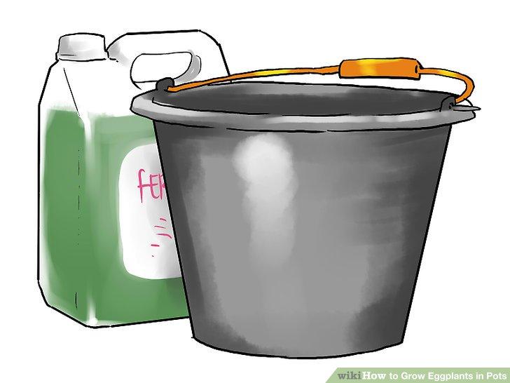 آموزش کاشت بادمجان در گلدان مرحله 25