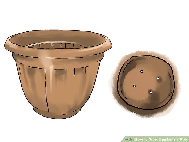 آموزش کاشت بادمجان در گلدان مرحله 3