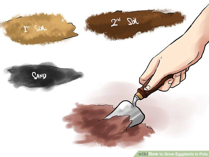 آموزش کاشت بادمجان در گلدان مرحله 5