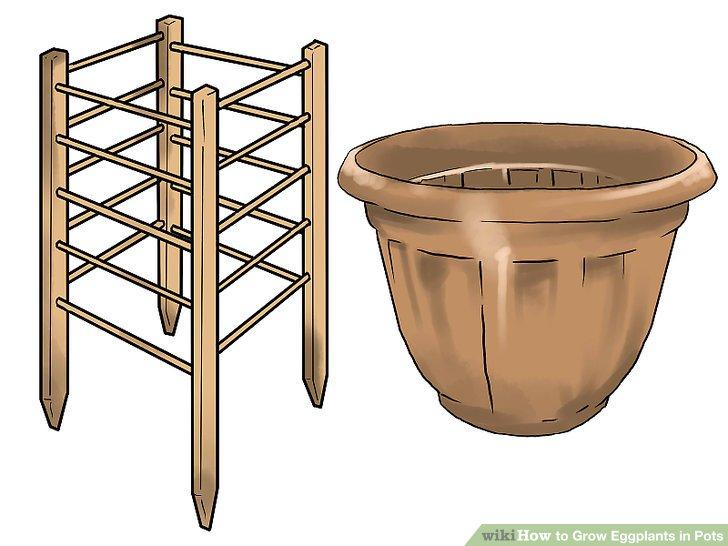 آموزش کاشت بادمجان در گلدان مرحله 6
