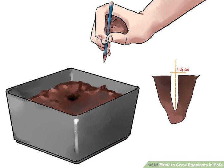 آموزش کاشت بادمجان در گلدان مرحله 9