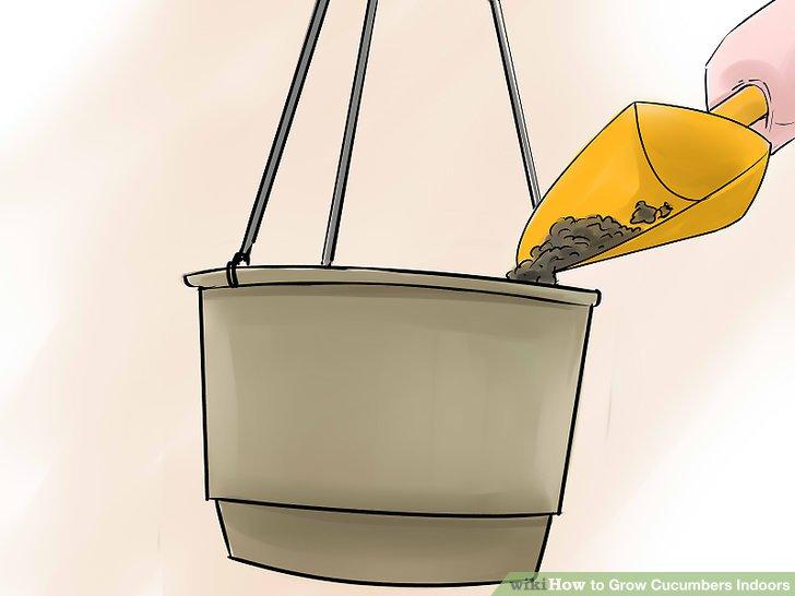 آموزش کاشت خیار در خانه مرحله  4
