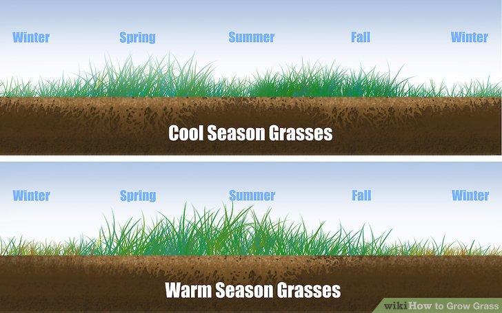 Image titled Grow Grass Step 1