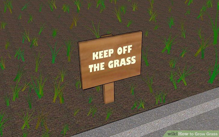Image titled Grow Grass Step 10