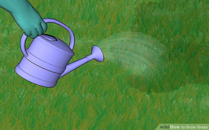 Image titled Grow Grass Step 11
