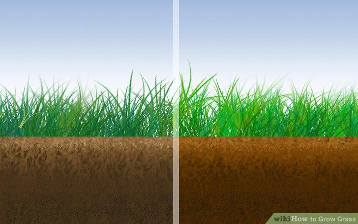 Image titled Grow Grass Step 2