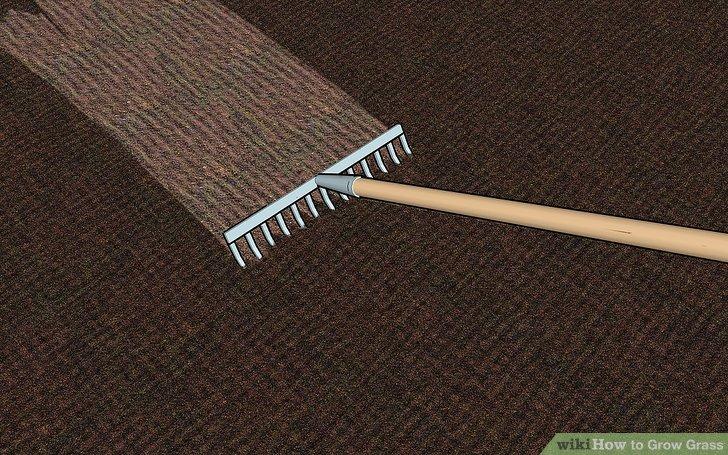 Image titled Grow Grass Step 4