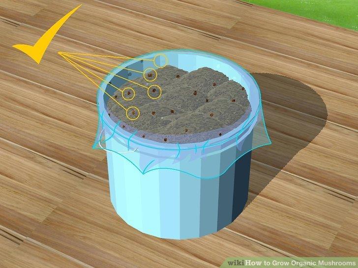 Image titled Grow Organic Mushrooms Step 19