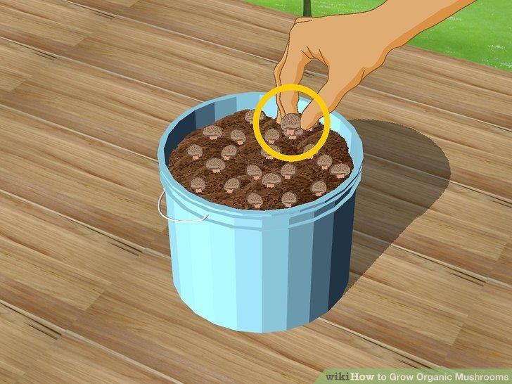 Image titled Grow Organic Mushrooms Step 22