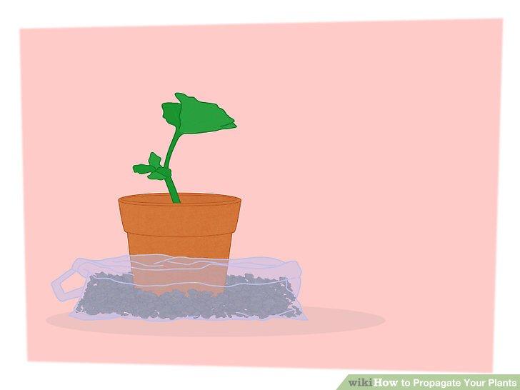 تکثیر گیاهان 10