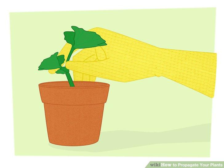 تکثیر گیاهان 13