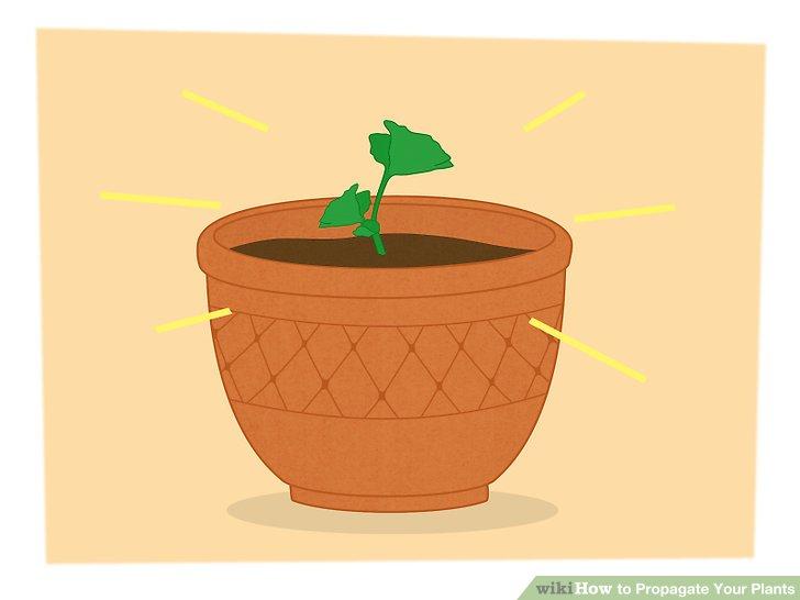 تکثیر گیاهان 14
