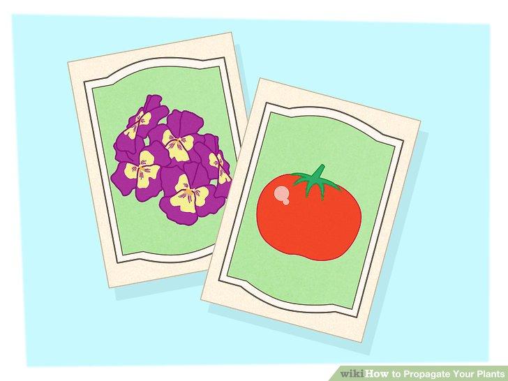 تکثیر گیاهان 15
