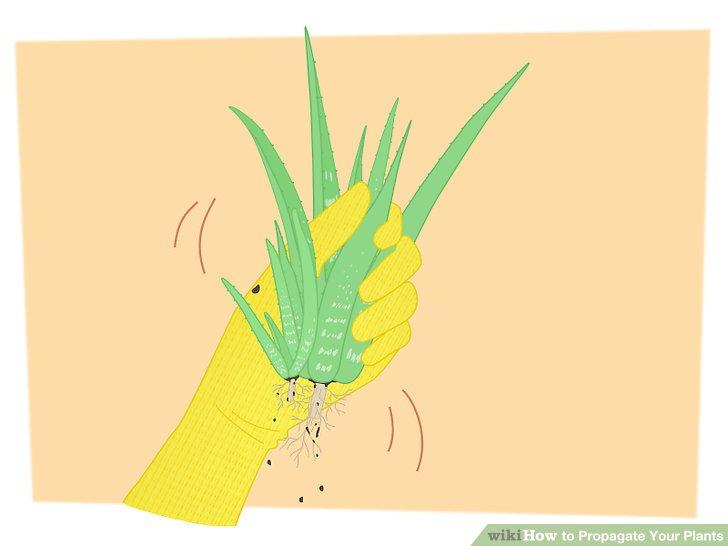 تکثیر گیاهان 2