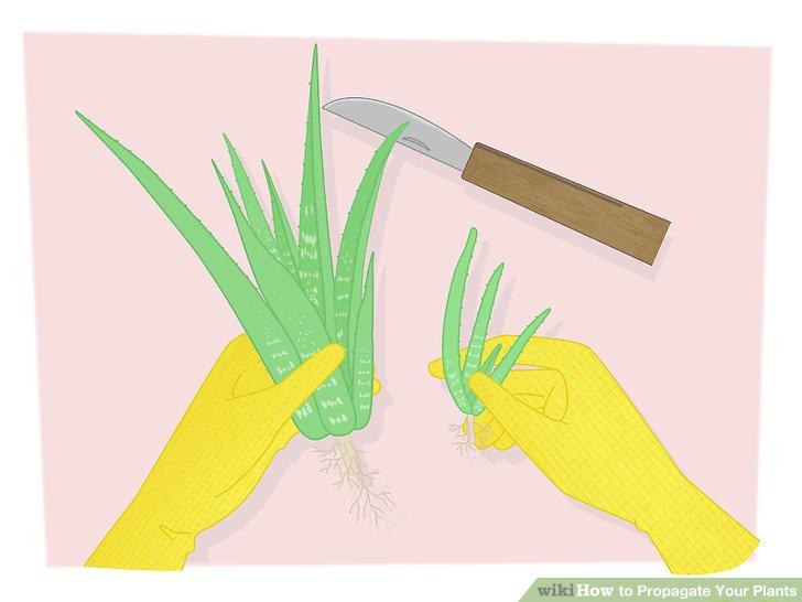 تکثیر گیاهان 3