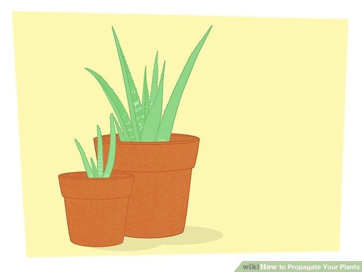 تکثیر گیاهان 4