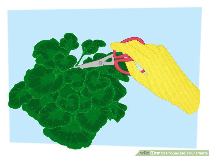 تکثیر گیاهان 7