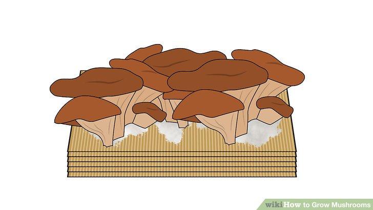 آموزش کاشت قارچ مرحله 10