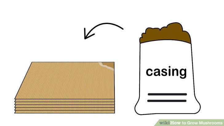 آموزش کاشت قارچ مرحله 13