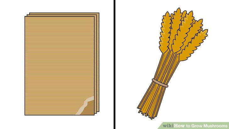 آموزش کاشت قارچ مرحله 2