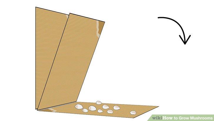 آموزش کاشت قارچ مرحله 3