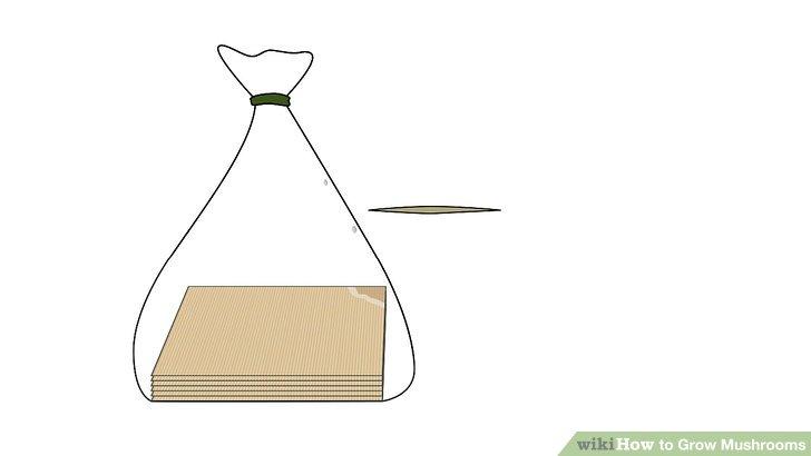 آموزش کاشت قارچ مرحله 4