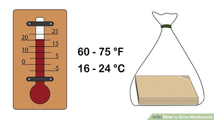 آموزش کاشت قارچ مرحله 5