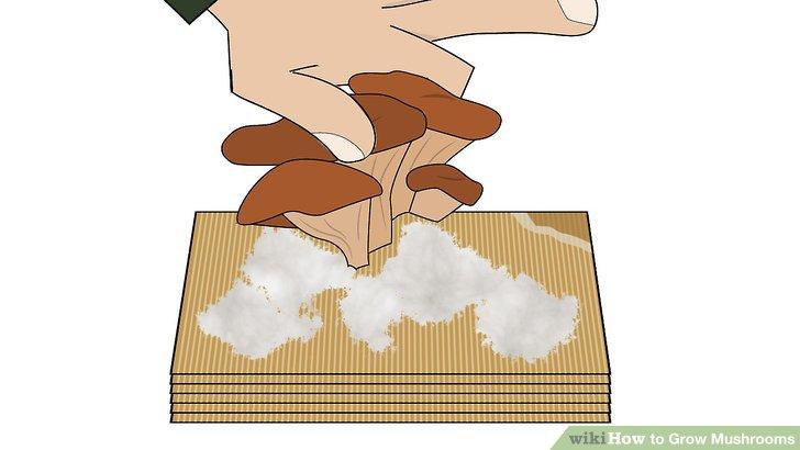 آموزش کاشت قارچ مرحله 9
