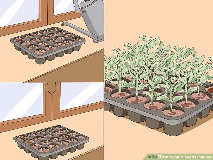 کاشت بذر در خانه 25