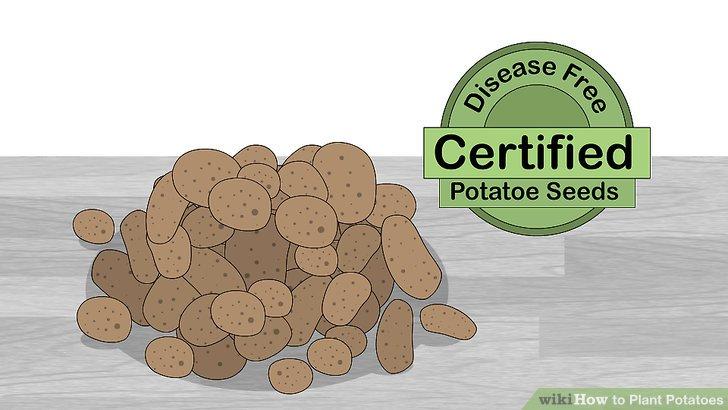 Image titled Plant Potatoes Step 2