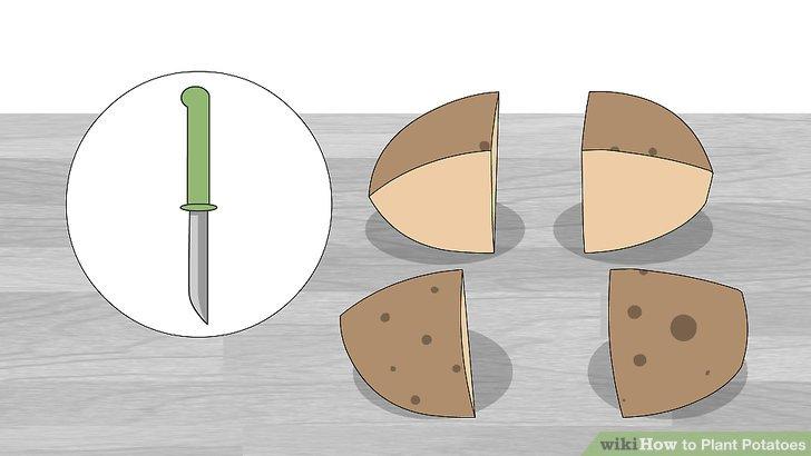 Image titled Plant Potatoes Step 3