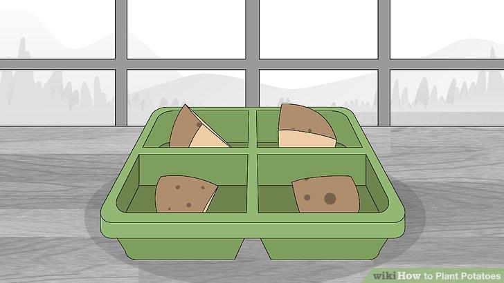 Image titled Plant Potatoes Step 5