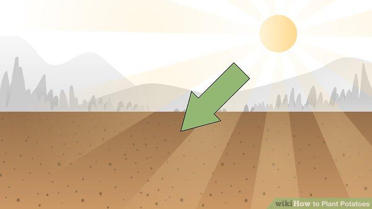 Image titled Plant Potatoes Step 8