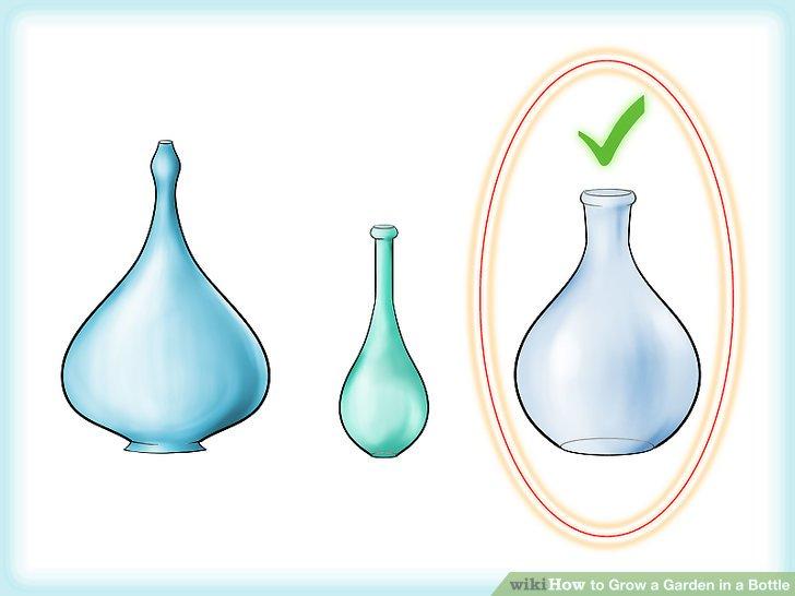 کاشت گیاه در بطری شیشه ای مرحله  1
