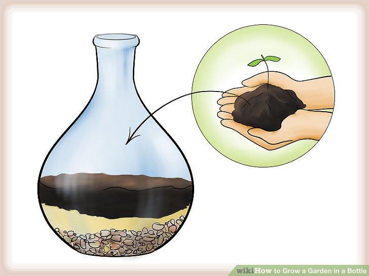 کاشت گیاه در بطری شیشه ای مرحله  4