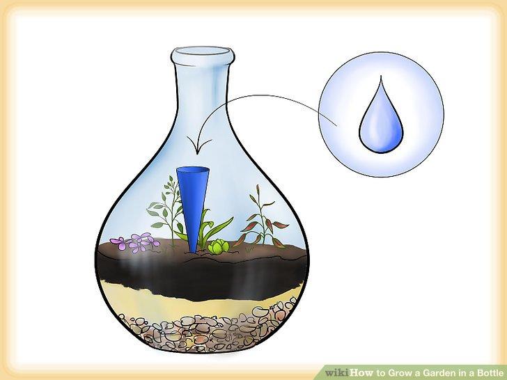 کاشت گیاه در بطری شیشه ای مرحله  6