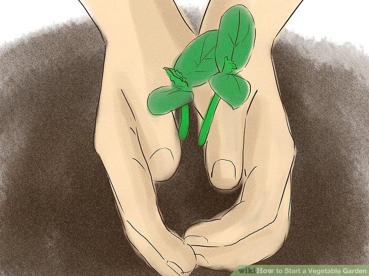 آموزش ايجاد باغ سبزي مرحله 13