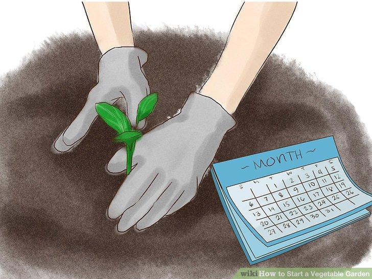 آموزش ايجاد باغ سبزي مرحله 8