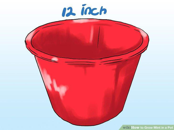 آموزش کاشت نعناع در گلدان مرحله 11