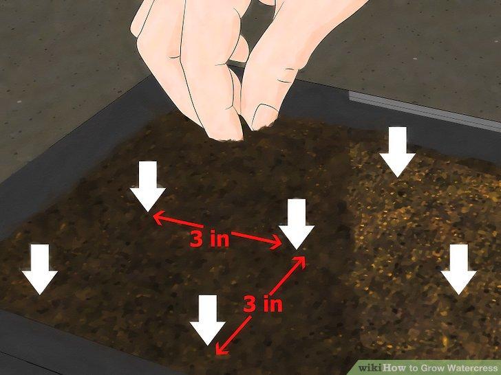 Image titled Grow Watercress Step 5