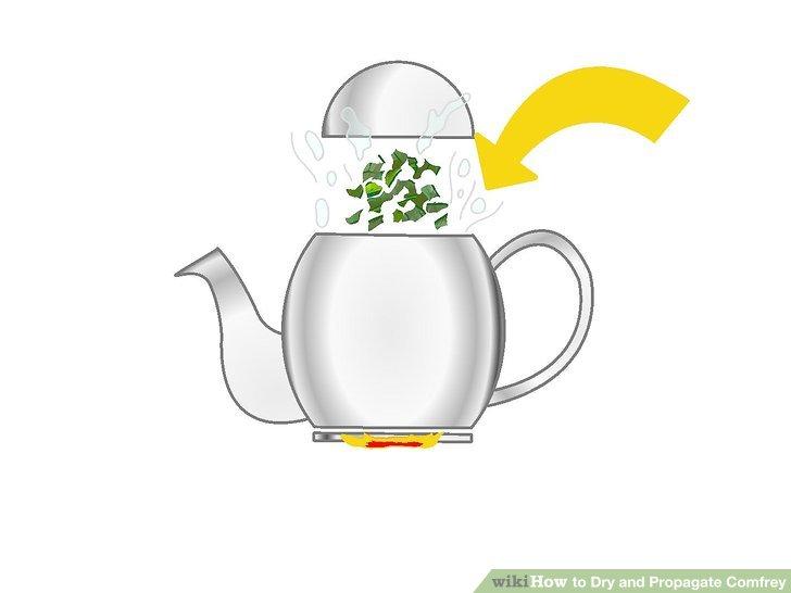 گیاه دارویی کامفری 11