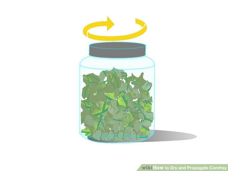 گیاه دارویی کامفری 4