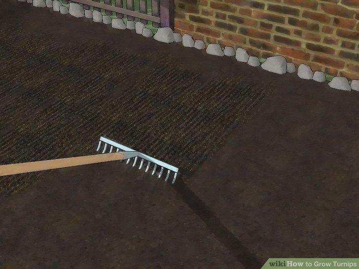 Image titled Grow Turnips Step 3