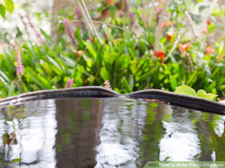 آبیاری گیاهان مرحله 12