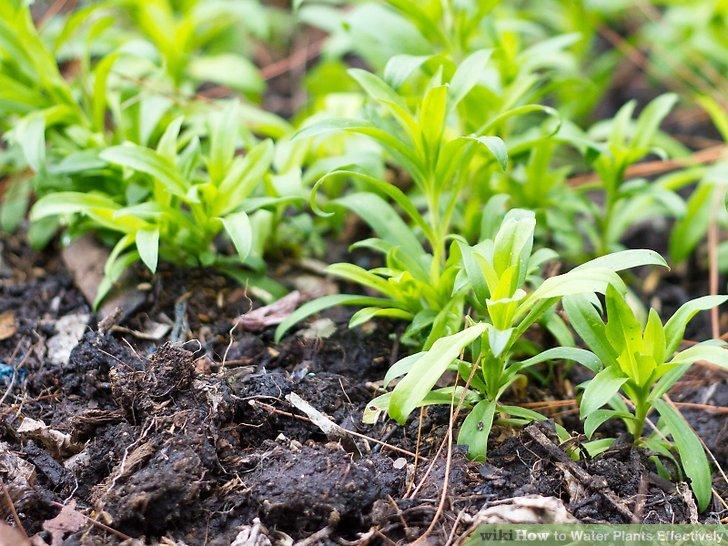 آبیاری گیاهان مرحله 4